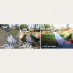 Streambank Restoration - Stokes Pit Surrey, BC