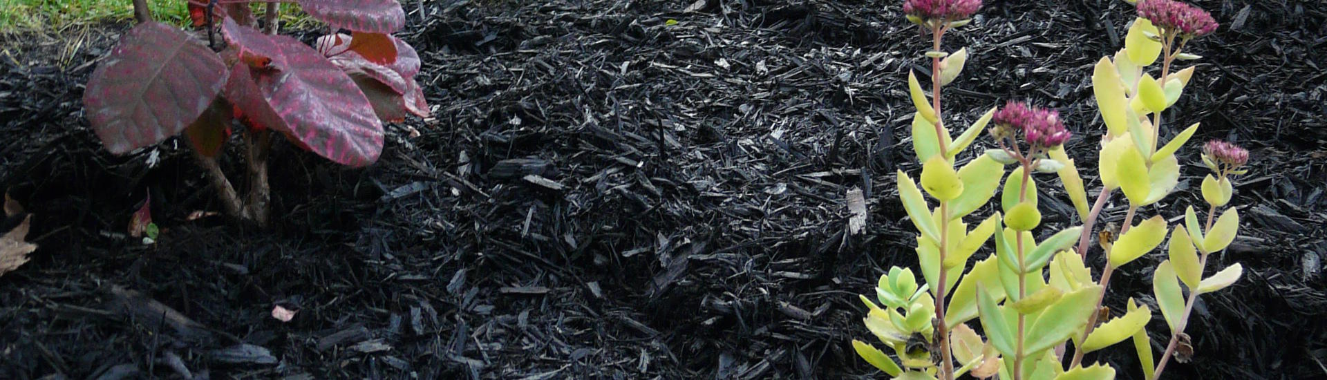 Black Mulch for landscaping