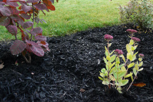 Black Mulch
