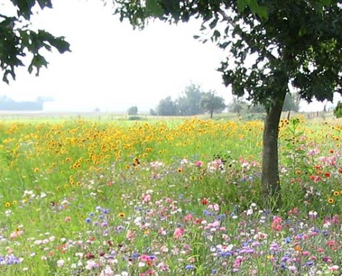 Terraseeded Wildflower Meadow