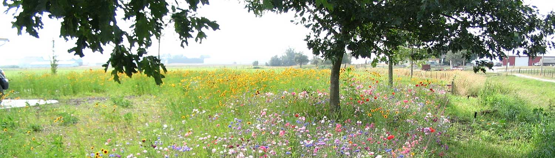 Terraseeded Wildflower Meadow