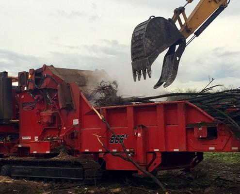 Denbow grinding hazelnut trees