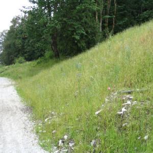Erosion Control - EcoBlanket