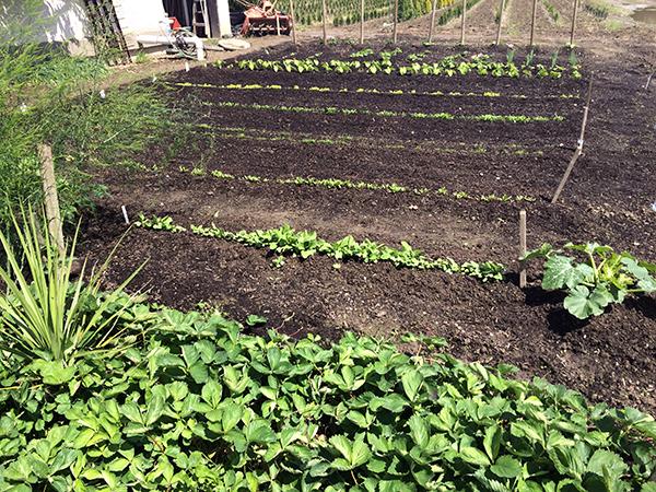 grozone garden soil