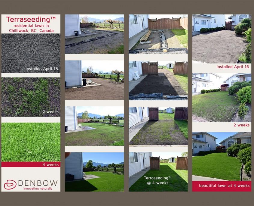 Terraseeding residential lawn Denbow