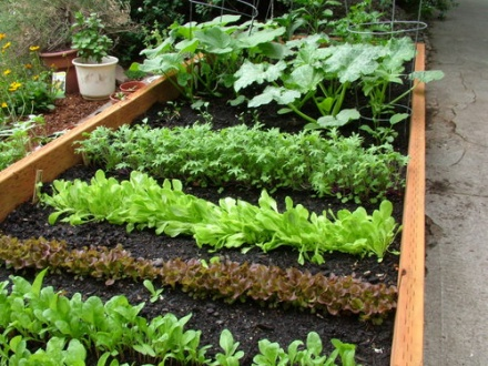 vegetable garden plant arrangement