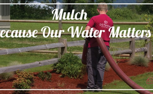mulch helps lower water usage during the hot months