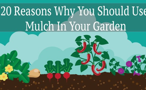 20 reasons why you should use mulch in your garden