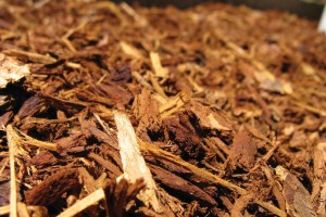 is coloured mulch safe for your garden 2