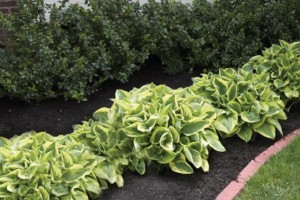 is coloured mulch safe for your garden 1