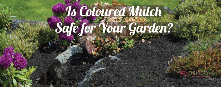 is coloured mulch safe for your garden