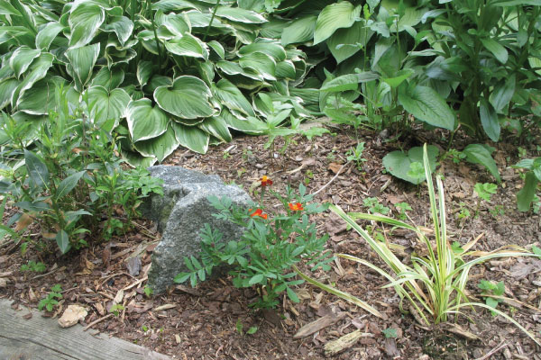 benefits of using mulch in your garden 1