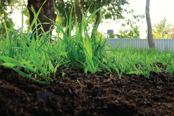 benefits of using mulch in your garden