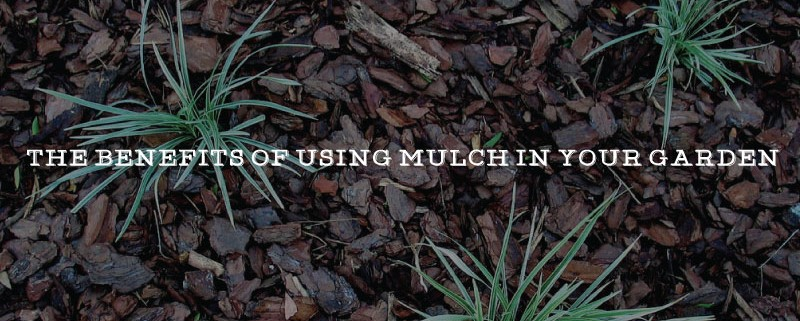 the cover page image for the article benefits of mulch in your garden