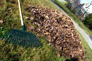 Fall Landscaping Care 6 Steps to Take Right Now-raking leaves