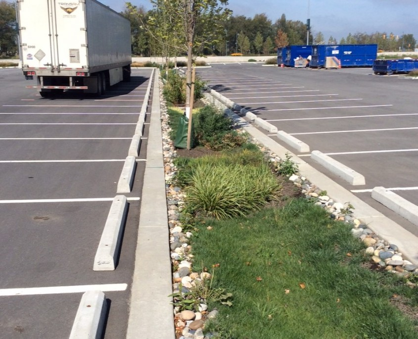 greenery planted in parking lot 1