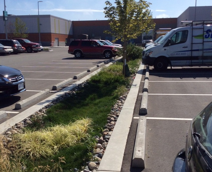 greenery planted in parking lot