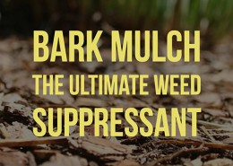 Bark Mulch the ultimate weed suppressant