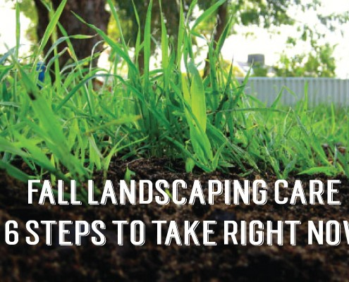 six-steps-for-landscape-care-1