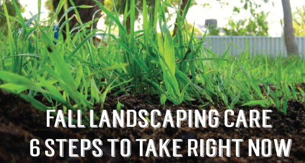 six-steps-for-landscape-care-1