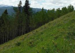 Erosion Control on Steep Slopes & Embankments