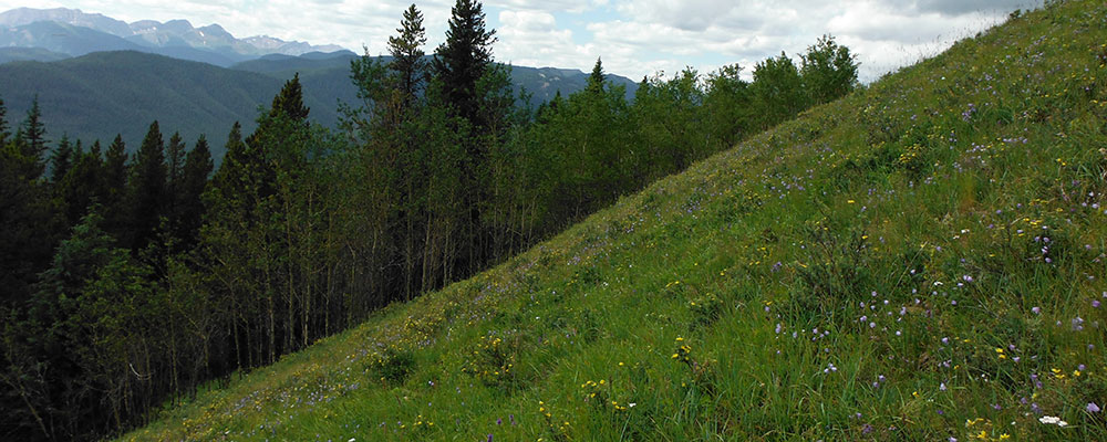 5 Steps For Erosion Control On Steep Slopes And Embankments Denbow