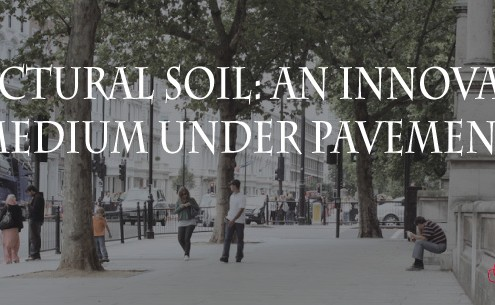 structural-soil-under-pavement-feature photo