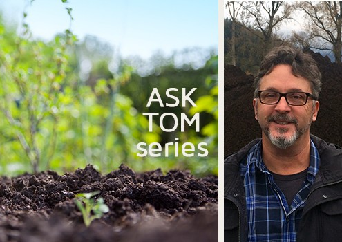 Ask Tom - Who is Tom