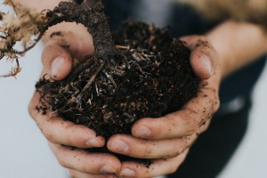 Should you buy engineered soil?