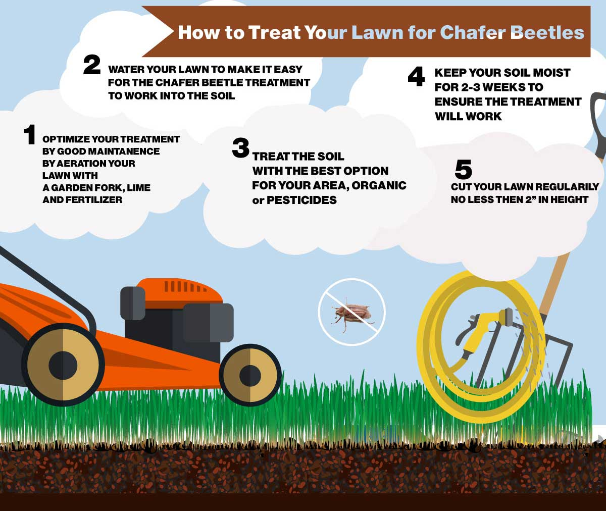 CHAFER-BEETLE-INFO-5