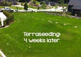 terraseeding