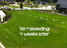 Terraseeding 4 weeks later