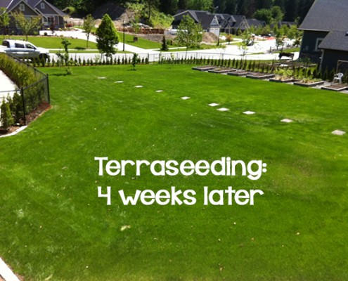 Terraseeding 4 weeks later