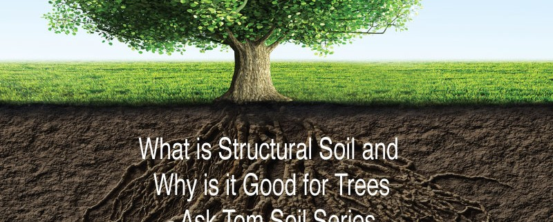 What-is-Structural-Soil-and-Why-is-it-Good-for-Trees