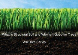 ask-tom-what-is-structural-soil-and-why-is-it-good-o