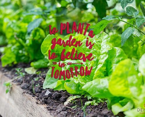community garden chilliwack denbow grozone soil