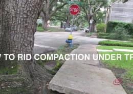 tree-roots-in-sidewalk-header