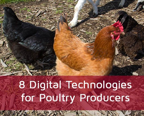8 Digital Technologies for Poultry Producers