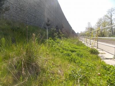 South Fraser Perimeter Road Terraseeding